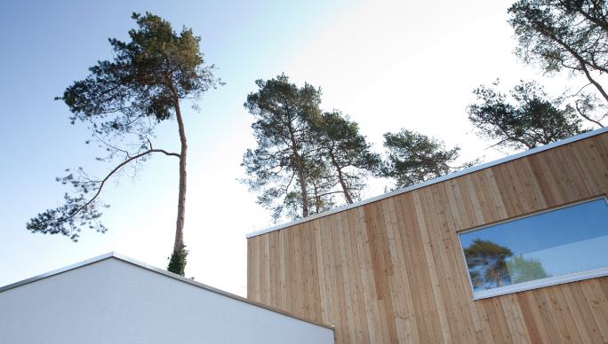 Ausschnitt Holzhaus umgeben von hohen Bäumen