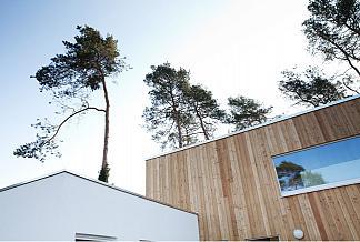 Blickwinkel von unten zu den Bäumen, Holzfassade, Holzanbau